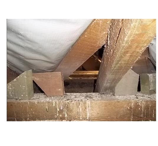 Taubenabwehr, Kammerjäger in Neidlingen